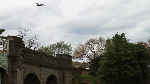 1260 Airplane Flying by the Cherry Blossoms Washin Footage