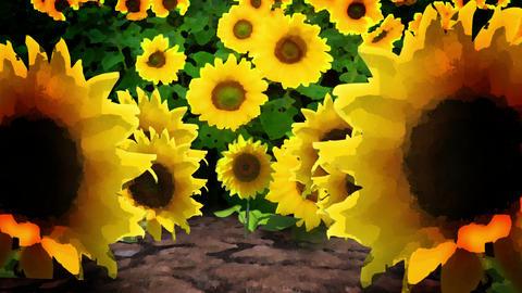 Sunflowers in a Field, 4K Footage