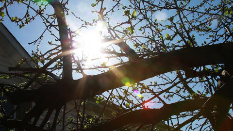 Tree Growning New Leaves, Spring is Here Footage