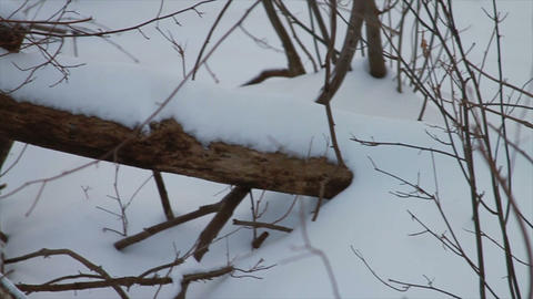 0726 Fresh Snow in the Forest and Trees at Sunset Stock Video Footage