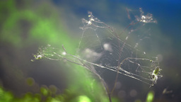 Spider net over dry wild plant Footage