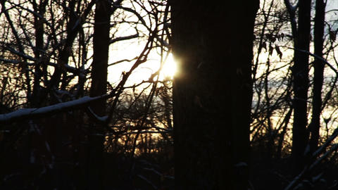 0738 Fresh Snow in the Forest and Trees at Sunset Stock Video Footage