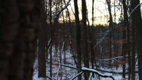 0740 Fresh Snow in the Forest and Trees at Sunset Stock Video Footage