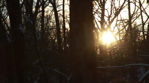 0762 Fresh Snow in the Forest and Trees at Sunset Stock Video Footage