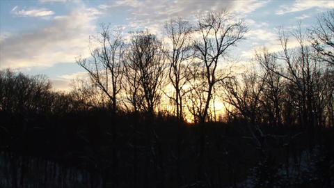0769 Fresh Snow on Pin Tree at Sunset Stock Video Footage