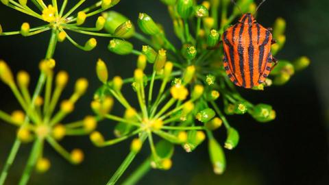 Bug Footage