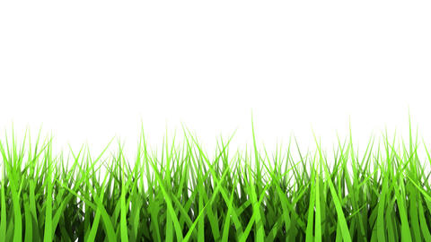 Green Grass On White Background. Matte Channel Stock Video Footage