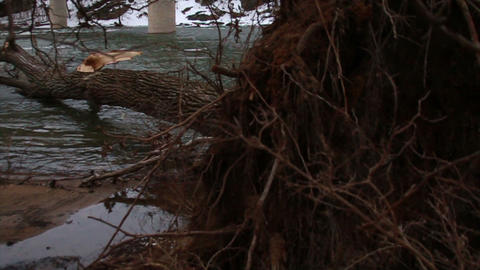 0516 Tree Fallen Down in River During Winter , Slo Footage