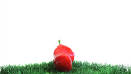 Red pepper on grass rotating Footage