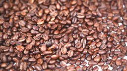Coffee beans turning Footage