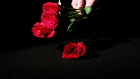 0562 Roses being Picked Up in Slow Motion Stock Video Footage