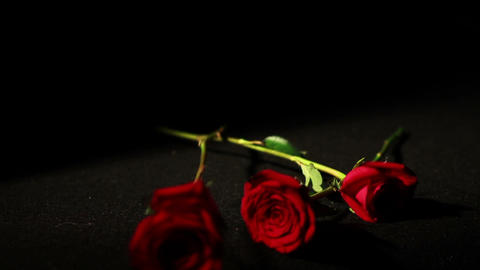 0566 Roses Falling in Slow Motion 2 Footage