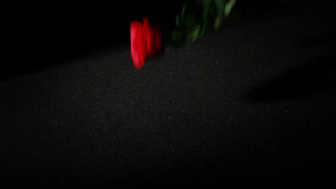 0570 Roses Falling in Slow Motion Stock Video Footage
