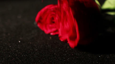 0573 Roses Being Picked Up in Slow Motion 2 Stock Video Footage