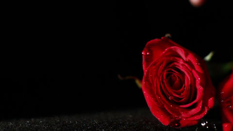0576 Roses Falling in Slow Motion Footage
