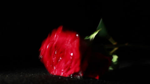 0579 Roses Falling in Slow Motion Stock Video Footage