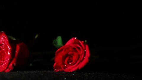 0579 Roses Falling in Slow Motion Footage