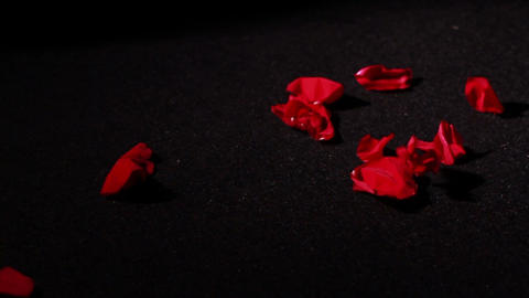 Dying Love, Rose Petals on Ground Stock Video Footage