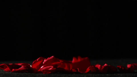 Dying Love, Rose Petals on Ground Footage