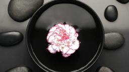 Beautiful flower turning on itself Stock Video Footage
