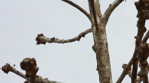 Interesting Tree on a Cloudy Day Stock Video Footage