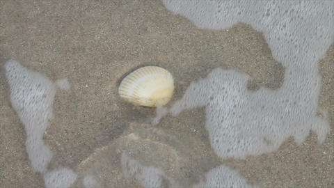 0104 Seashell on Beach with Wave Stock Video Footage