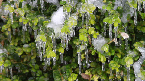 0207 Ice Storm, Icing on Bush, Icicle Footage