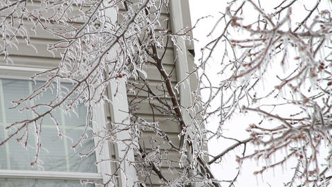 0239 Ice Storm , Icing on Tree , Icicle Stock Video Footage