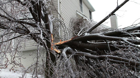 0240 Ice Storm, Icing on Tree, Icicle, Fallen Tree Footage