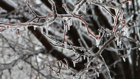 0243 Ice Storm, Icing on Tree, Icicle Footage