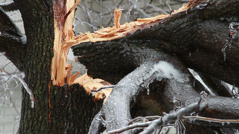 0244 Ice Storm, Icing on Tree, Icicle, Fallen Tree Footage