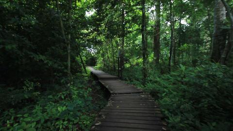 hiker walking in rain forest Footage