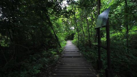 hiker walking in rain forest Stock Video Footage