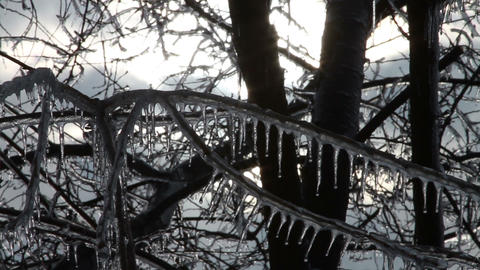 0258 Ice Storm, Icing on Tree, Icicle Melting Stock Video Footage