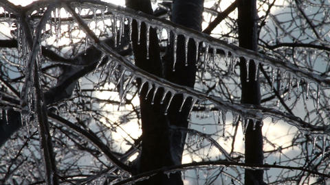 0261 Ice Storm, Icing on Tree, Icicle Melting Footage