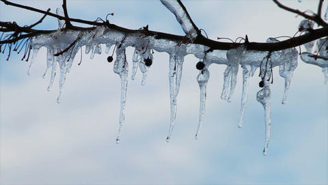 0264 Ice Storm, Icing on Tree, Icicle Melting Stock Video Footage