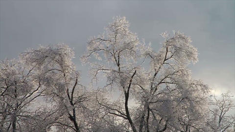 0268 Ice Storm, Icing on Tree, Icicle Melting Footage