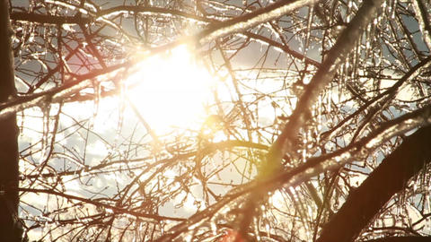 0269 Ice Storm, Icing on Tree, Icicle Melting Footage