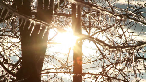 0270 Ice Storm, Icing on Tree, Icicle Melting 2 Stock Video Footage