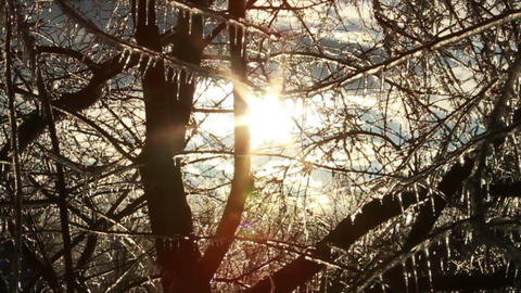 0271 Ice Storm, Icing on Tree, Icicle Melting Footage