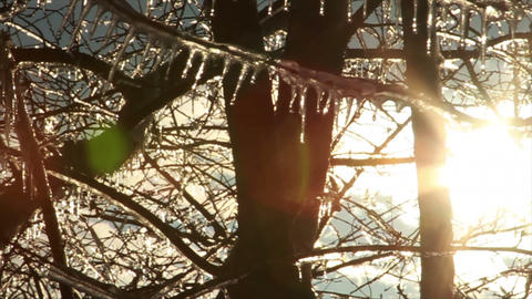 0272 Ice Storm, Icing on Tree, Icicle Melting Footage