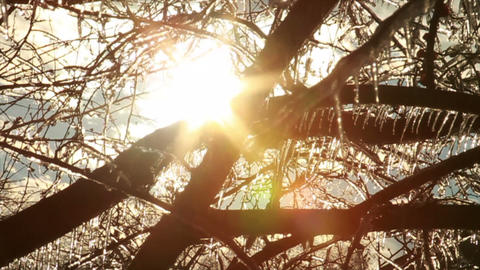 0273 Ice Storm, Icing on Tree, Icicle Melting Footage