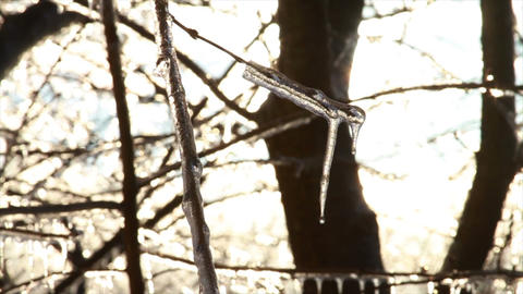 0276 Ice Storm, Icing on Tree, Icicle Melting Stock Video Footage