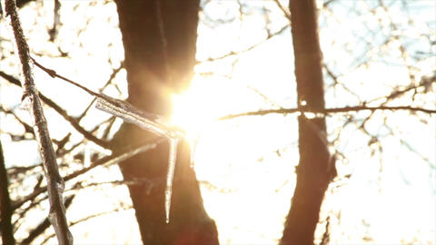 0277 Ice Storm, Icing on Tree, Icicle Melting Footage