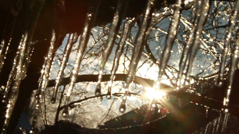 0279 Ice Storm, Icing on Tree, Icicle Melting Footage