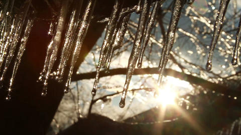 0280 Ice Storm, Icing on Tree, Icicle Melting 2 Footage