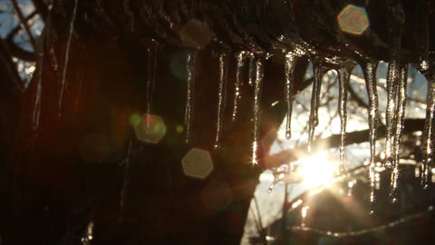0281 Ice Storm, Icing on Tree, Icicle Melting 3 Stock Video Footage