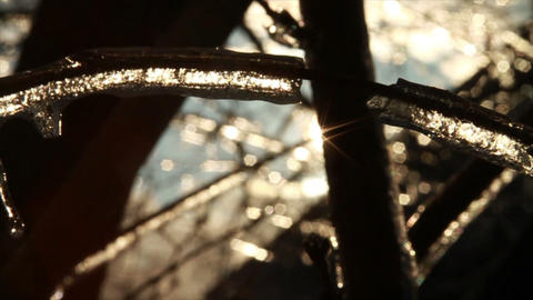 0284 Ice Storm, Icing on Tree, Icicle Melting 3 Footage