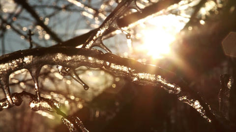 0285 Ice Storm, Icing on Tree, Icicle Melting Footage