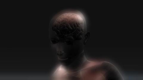 Animation of a human Brain Animation